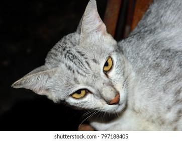 Close up of a beautiful cat, selective focus.