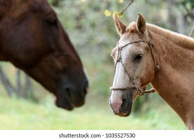 close up of a beautiful horse at the nature