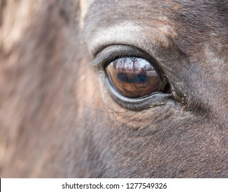 Close up of a beautiful horses eye