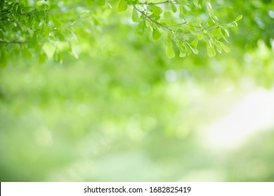 Close up of beautiful nature view green leaf on blurred greenery background under sunlight with bokeh and copy space using as background natural plants landscape, ecology wallpaper concept.