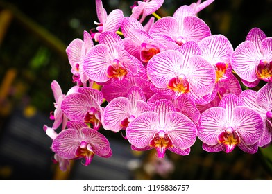 Close up of beautiful orchids in bloom