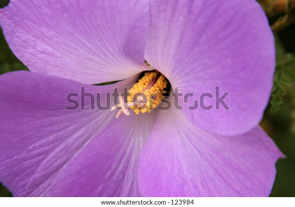 close up of a beautiful purple flower