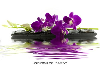 Close up of beautiful purple orchid on massage stones (white background) with soft focus reflected in the water