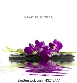 Close up of beautiful purple orchid on massage stones (white background) with soft focus reflected in the water. With sample text