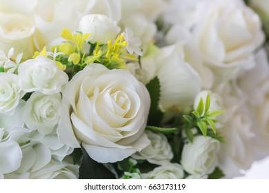 close up Beautiful roses