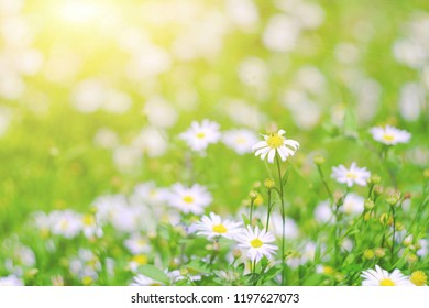 close up beautiful white flower in garden, nature wallpaper background, happy valentine's day concept