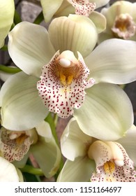 Close up of beautiful white Orchids