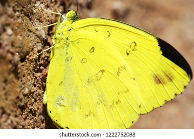close up of beautiful yellow butterfly