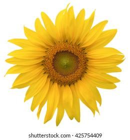 close up beautyful yellow sunflower isolated on white background
