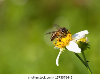 Close up bee on a flower