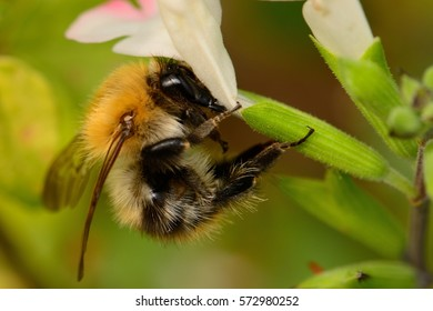 close up of a bee on a white flower