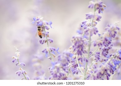 A close up of a bee and a vitex shrub.