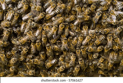 A close up of the bees on comb in hive.