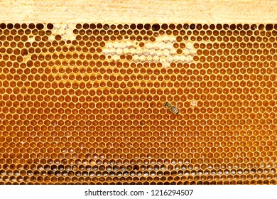 close up of bees on honeycomb in apiary - selective focus, copy space