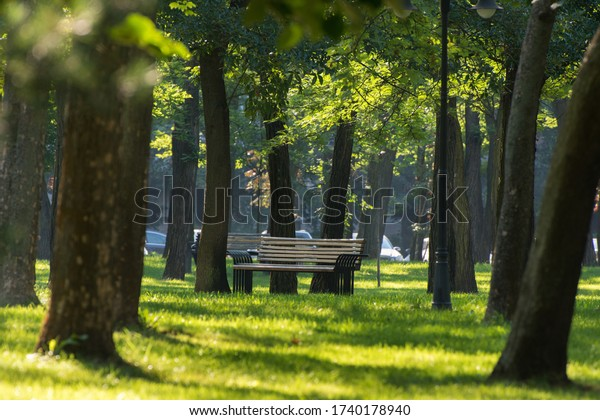 close-bench-morning-park-600w-1740178940
