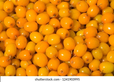 A close up of the berries of sea-buckthorn.