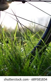 Close up of a bicycle wheel on green grass, in morning sunlight