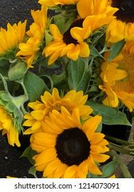 Close up of big sunflowers
