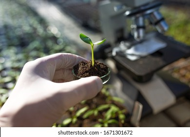 Close up of biologist's hand with protective gloves holding petri dish with soil and young plant. Microscope in background. Biotechnology, plant care and protection concept