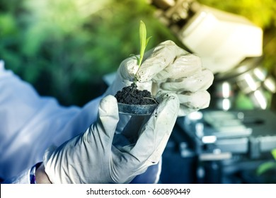 Close up of biologist's hand with protective gloves holding young plant with root above petri dish with soil. Microscope in background. Biotechnology, plant care and protection concept