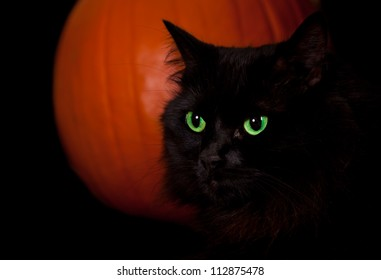 Close up of a black cat with glowing green eyes against a background of an orange pumpkin isolated on black.