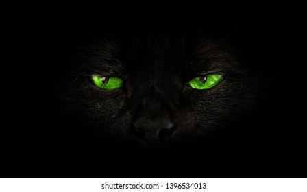 close up of black cat with green eyes on black background. Horror atmospheres and halloween concept. Look panther and witch eyes. Bad luck and superstition concept.