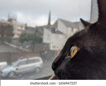 Close up of a black cat looking through a window