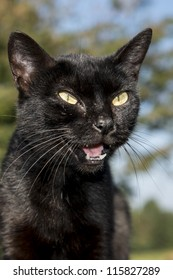 Close up of a black cat with yellow eyes