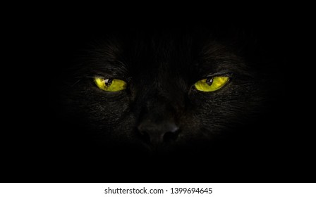 close up of black cat with yellow eyes on black background. Horror atmospheres and halloween concept. Look panther and witch eyes. Bad luck and superstition concept.