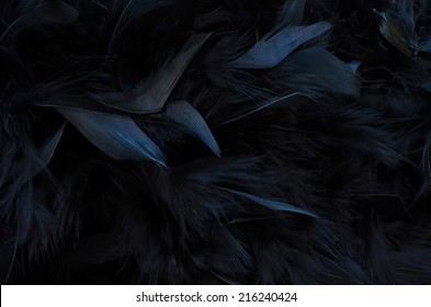 close up of black feathers