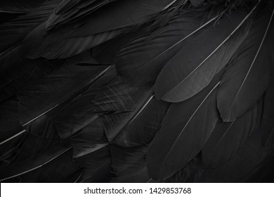 close up of black feathers background. Top view