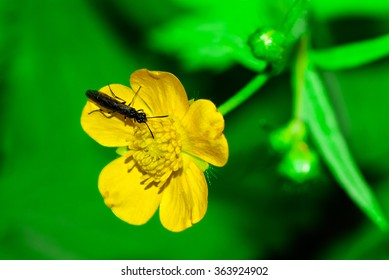 Close up of a black insect on a yellow flower