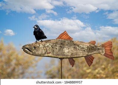 Close up of Black Rook perched on wooden pike weathervane.