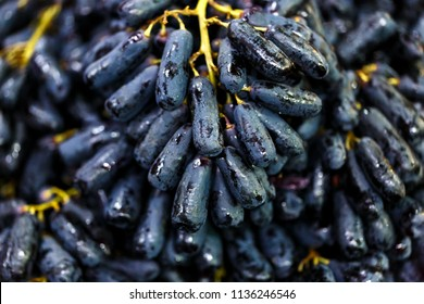 close up black seedless Moon Drops grape or Witch Fingers grape