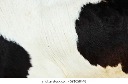 Close Up Black and White Cow Fur Background