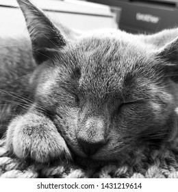 Close up black and white photo of a Russian blue kitten sleeping on a blanket.