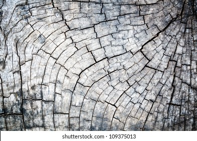 Close up of the black and white tree stump texture pattern. Detail of the wood with grain look old and vintage. Abstract for nature background