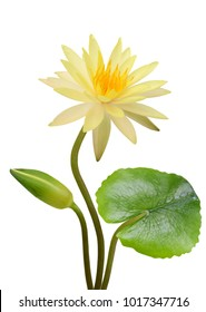 Close up blooming water lily flower isolated on white background