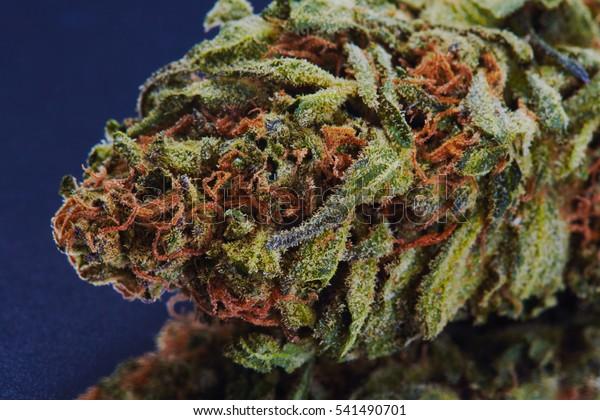 Close Blue Cookies Marijuana Bud On Stock Photo (Edit Now