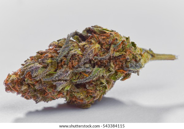 Close Blue Cookies Marijuana Bud On Stock Photo (Edit Now