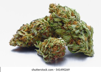 Close up of Blue Cookies marijuana buds on white background