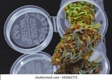 Close up of Blue Cookies marijuana buds in prescription bottle