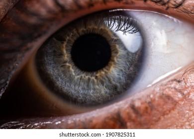 Close up Blue eye macro