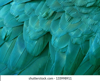 Close up of blue and green macaw feathers