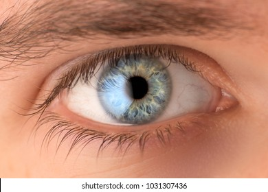 Close up of blue human eye with white reflection