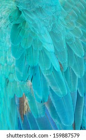 Close up of Blue Macaw Feathers.