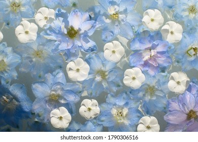 Close up of blue and white flower heads in the water