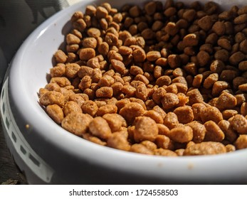 Close up of bowl of dry cat food in the sun