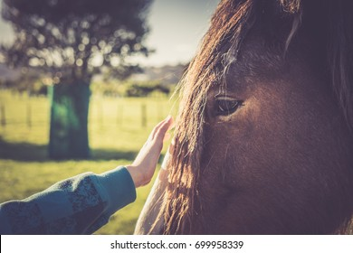 Close Up Boy Reaching to Touch Clydesdale Horse on Face at Farm Selective Focus Copy Space