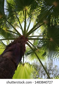 close up of branches of palmtrees under a blue sky. Looking up trough leaves of a palmtree.